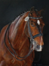 Horse portraits in oil by Mary Sand